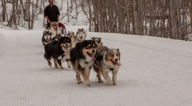Cherche handler/musher en Savoie