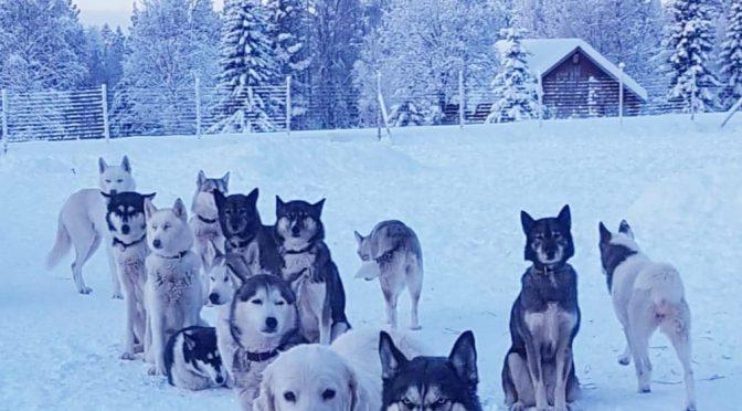 L'équipe sympathique du Fur Rendez-vous recherche un/une handler pour la saison 2019/2020