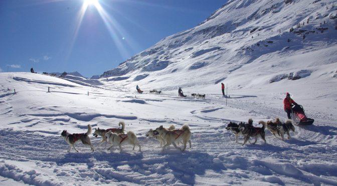 Husky Adventure offre des postes de mushers pour l'hiver 2019-2020