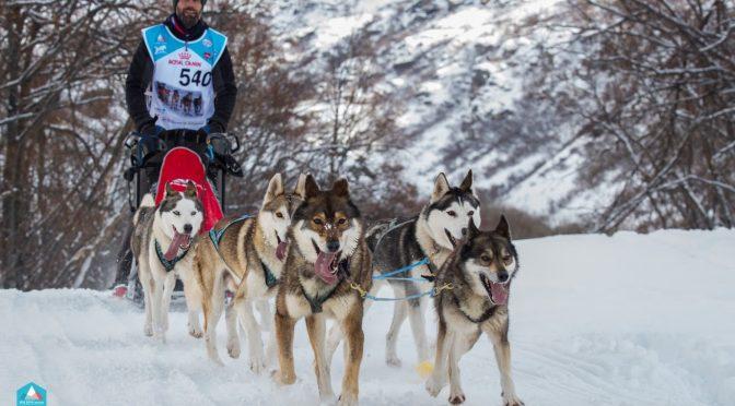 Chiots de race husky LOF à vendre 2