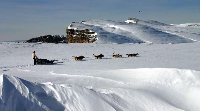L'équipe de la Draye Blanche recherche des mushers pour l'hiver 2020-2021