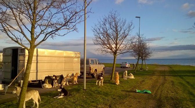 DÉJÀ VENDUE -Remorque pour chiens à vendre