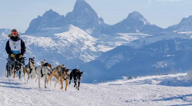 POSTE COMBLÉ – Le CalvinTess Racing Kennel offre un poste de handler au Canada