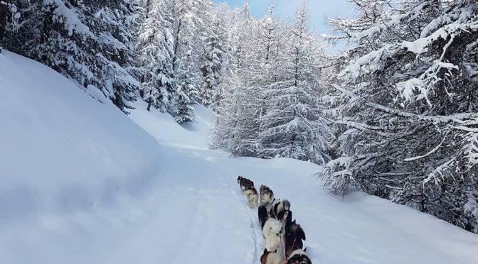 Recherche musher handler dans les Hautes-Alpes pour la saison d'hiver 2020-2021