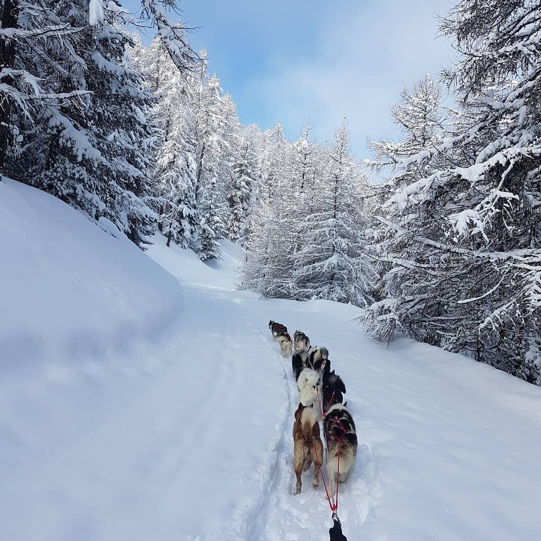 Musher handler dans les Hautes-Alpes