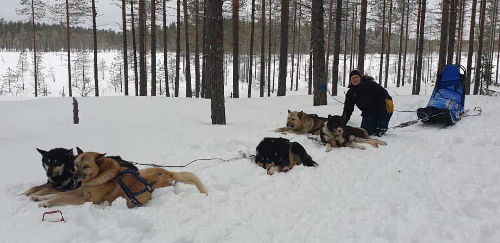 Meryl recherche un poste de handler-musher pour saison 2020-2021