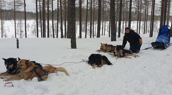Meryl recherche un poste de handler-musher pour la saison 2020-2021