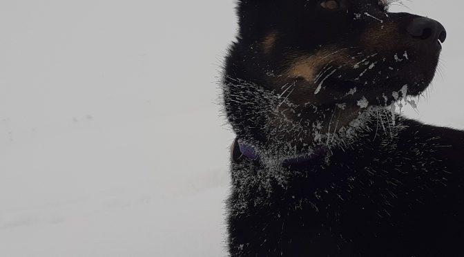Joseph éducateur canin recherche un poste de musher/handler
